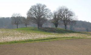 Archäologische Wanderung: Keltische Grabhügel am Mindelsee