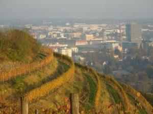 Weinprobe: Weinbau am Hohentwiel